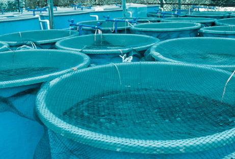 Agriculture & Aquaculture